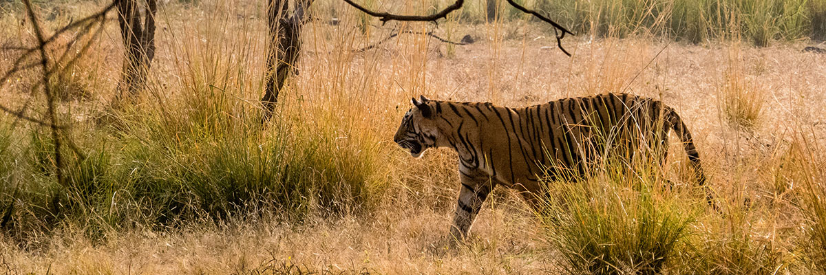 im Ranthambore Nationalpark